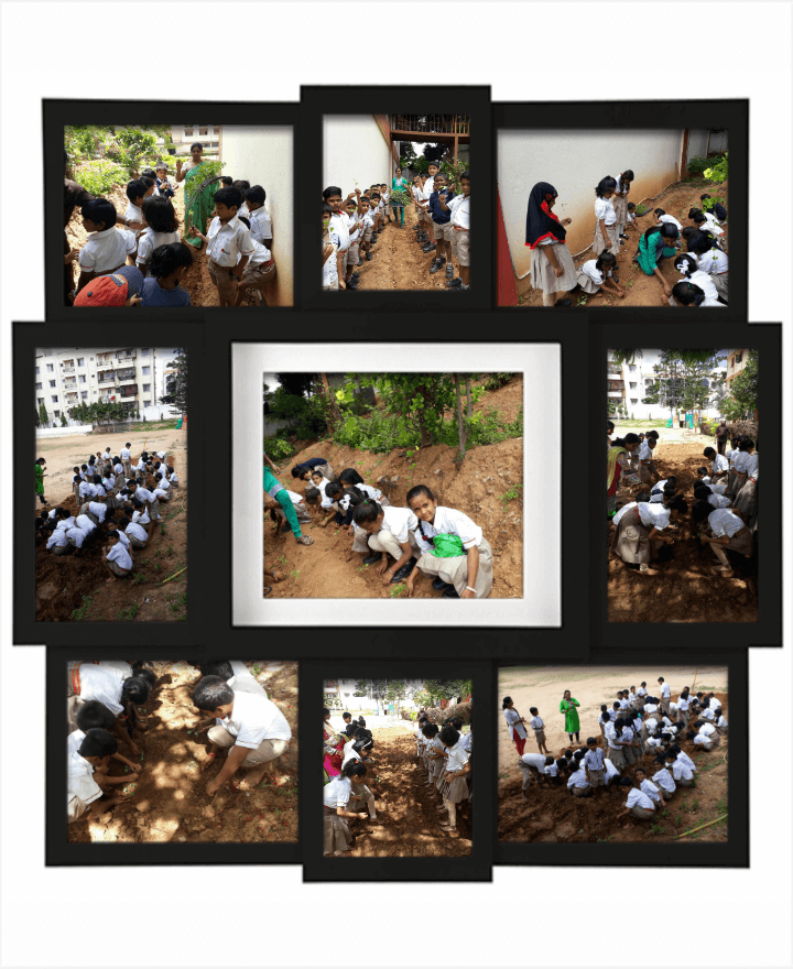 Tree plantation activity